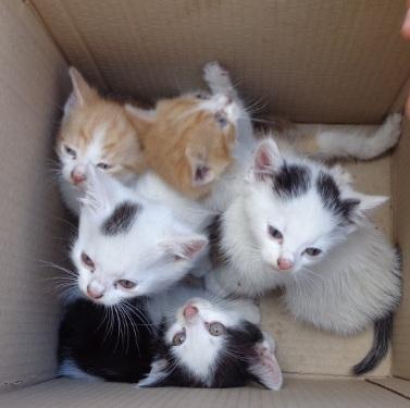 Topnotch Miau.PL • Zobacz wątek - Oddam kotki w dobre ręce ZH65